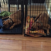 Rocky and Cash sleeping in crates