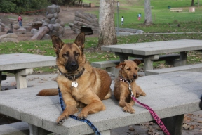 Roxy has been with Leah throughout her training and has helped teach her to come down from her anxious mindset.