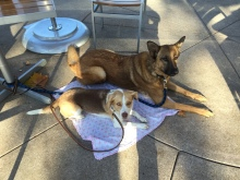 Roxy and Luna down stay Peets