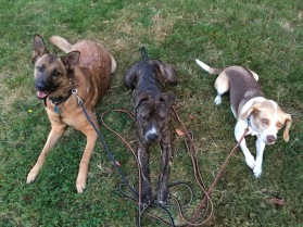 Roxy, Prissy and Luna down stay