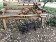 Roxy and Austin park bench