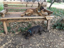 Roxy and Austin park bench