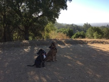 Roxy and Prissy hike
