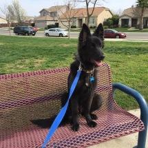 Sharky on a bench outside dog park