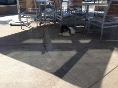 Meltzer outside of Peets Coffee