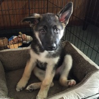 Major in his crate